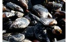 MOULES DAUTRES ORIGINES
