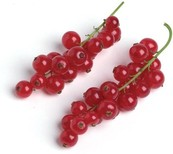 RED CURRANTS 125G FRESH