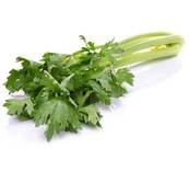 WHITE CELERY FRESH - BUNCH