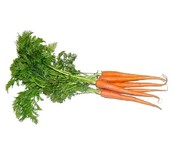 CARROTS BUNCH FRESH